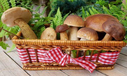 Gljivarski tjedan u Karlovačkoj županiji (2.10. – 12.10.2020.)