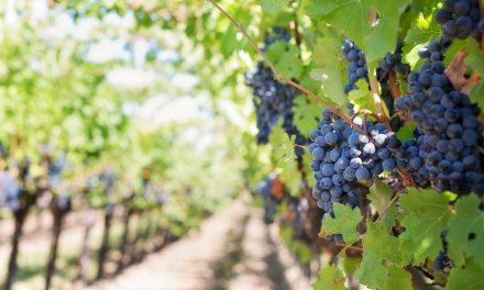 Priča o vinu