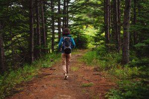 Šetnja kroz borovu šumu